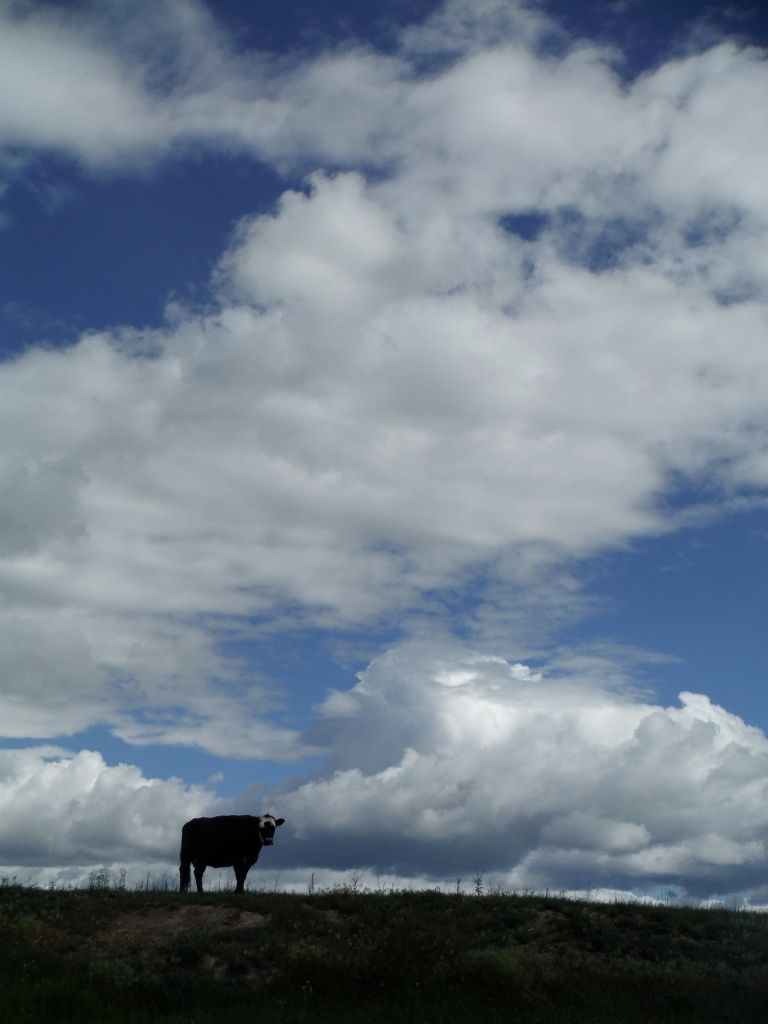 ... or is it Big Sky country?