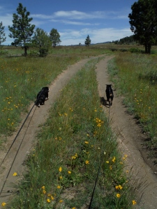 Chloe (left) and Jigs lead the 2014 summer solstice hike up Pasture Gulch.