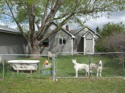 The last time Lolo and Borage were together here at the Martinsdale house, June 2013.